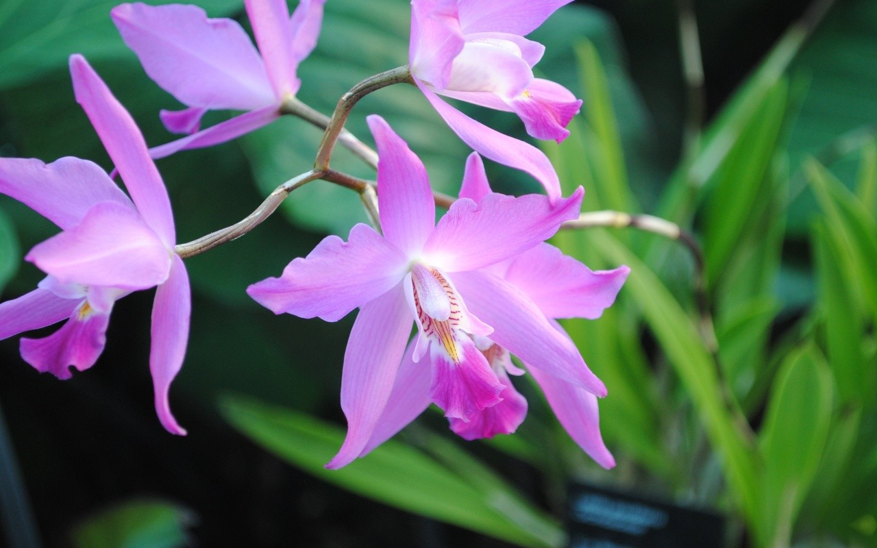 عکس زیباترین گل های جهان
