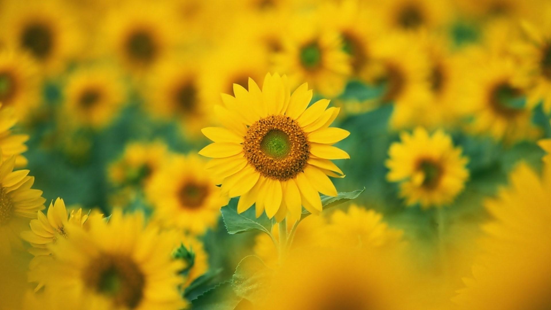 عکس قشنگترین گل ها