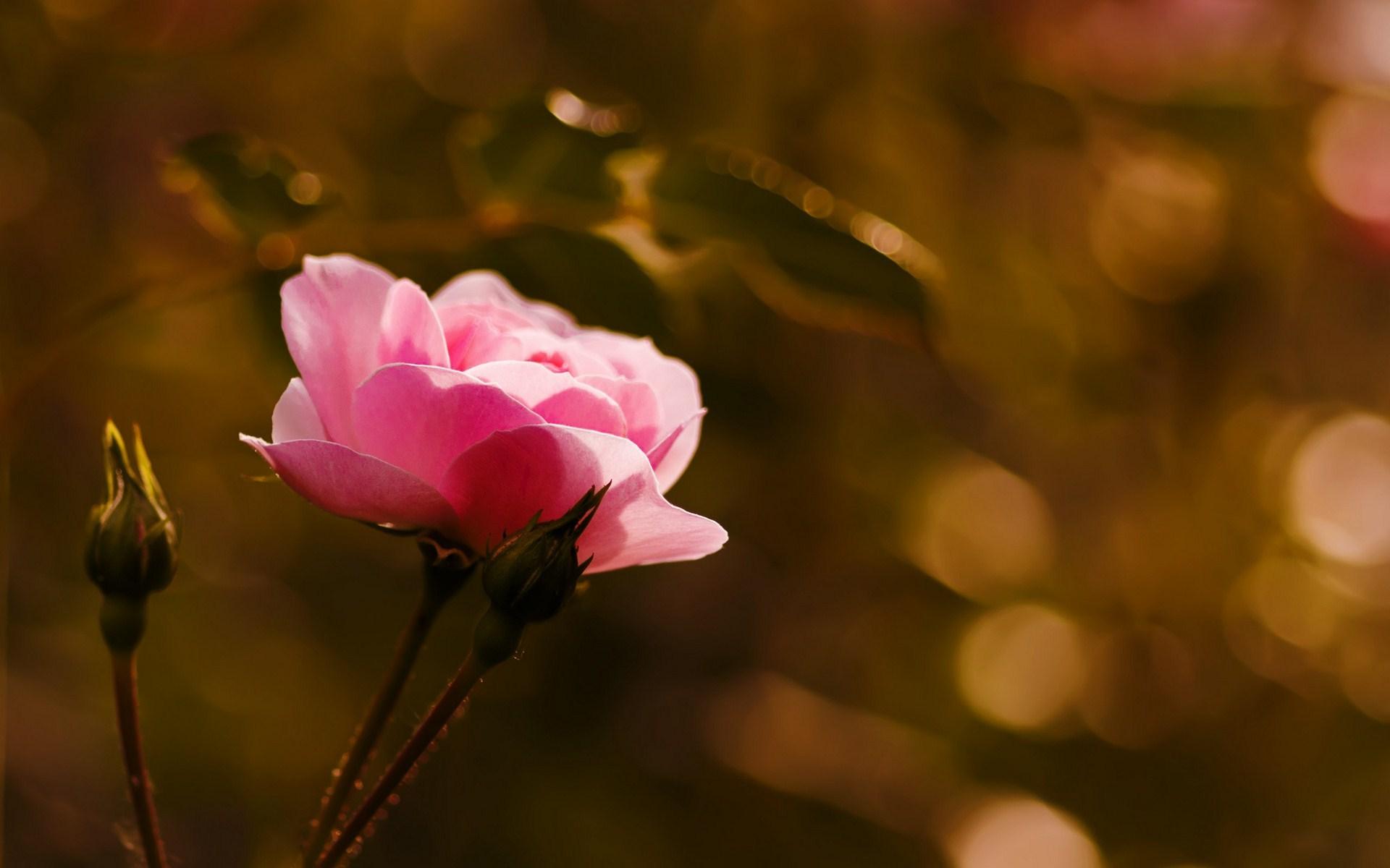 عکس های جدید و فوق زیبا از گل ها
