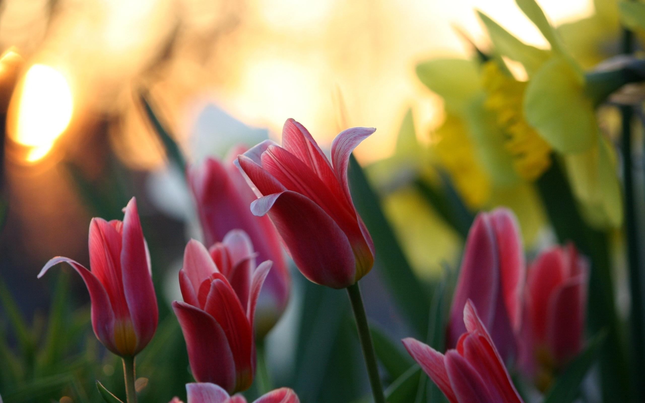 بهترین عکس ها از قشنگترین گل ها