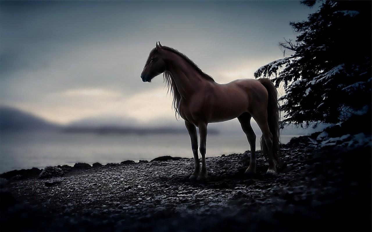 عکس+های+حیوانات+زیبا